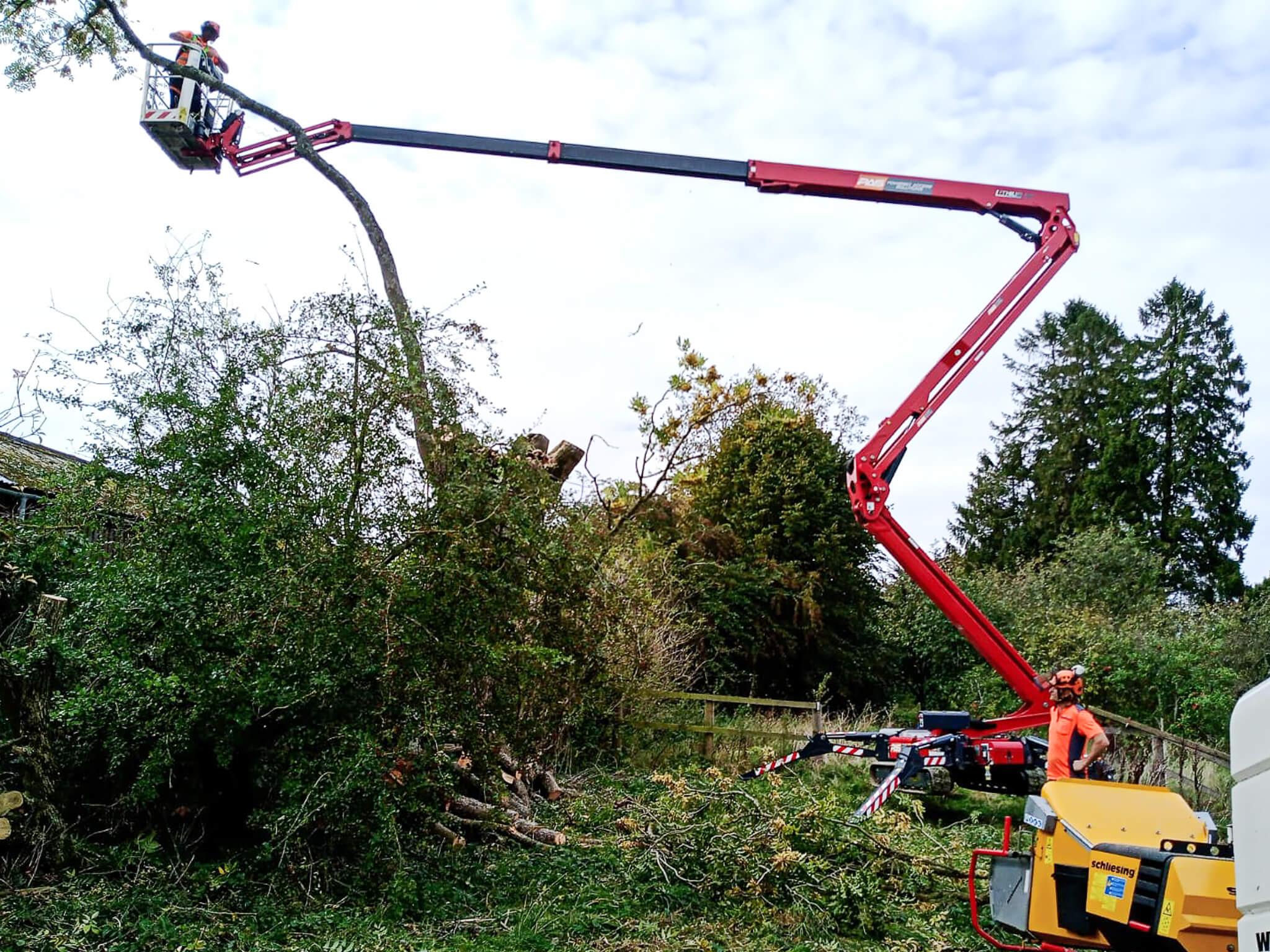 Corinium Arb - on site managing trees
