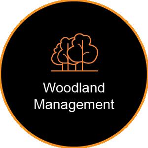 Corinium Arb - Gloucestershire - Woodland Management Service