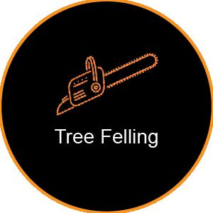 Corinium Arb - Gloucestershire - Tree Felling Service