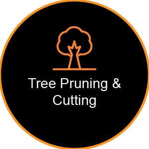 Corinium Arb - Gloucestershire - Tree Pruning & Cutting Service